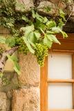 在窗口的葡萄 库存图片