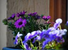 在窗口的蓝色和紫色花 库存照片