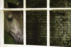 在窗口的马 免版税库存图片