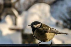 在窗口的鸟 免版税库存照片