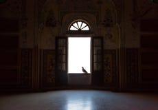 在窗口的鸽子 免版税图库摄影