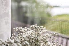 在窗口背景的小白花 软的家庭装饰 在花瓶的白色麦花 减速火箭的样式 下雨下落 免版税图库摄影