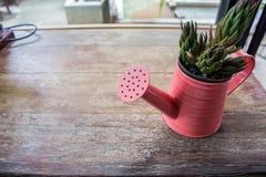 在窗口里显示的一个小植物罐 库存图片