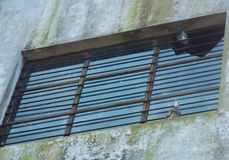 在窗口里栖息的两只鸽子 免版税库存图片