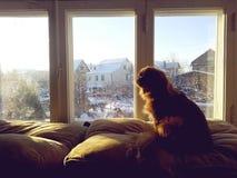 在窗口附近的狗 免版税库存照片