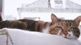 在窗口附近的猫在树雨外部 股票视频