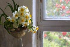 在窗口附近的水仙花 库存图片
