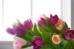 在窗口,拷贝空间附近开花背景,紫罗兰色和桃红色郁金香 免版税库存图片