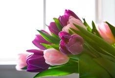 在窗口,拷贝空间附近开花背景,紫罗兰色和桃红色郁金香 免版税库存照片
