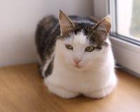 在窗台关闭的猫逗人喜爱的画象 库存照片
