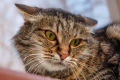 在窗台的一只凶猛,邪恶的猫在街道上 恼怒, mi 免版税库存图片