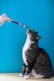 在窗台的猫 免版税库存图片