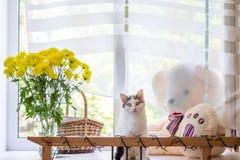 在窗台的猫 图库摄影