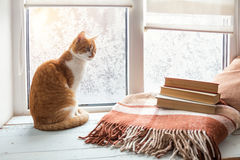 在窗台的红白的猫 免版税库存照片