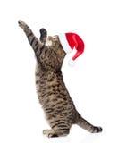 在站立在后腿和飞跃的红色圣诞节帽子的逗人喜爱的平纹小猫 背景查出的白色 免版税库存图片