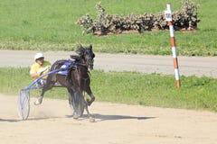 在竞技场Sibirskoe的小跑种族 库存图片