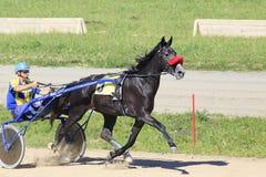 在竞技场Sibirskoe的小跑种族 免版税图库摄影