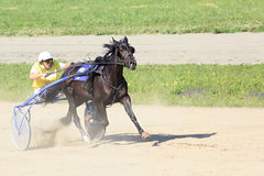 在竞技场Sibirskoe的小跑种族 免版税库存照片