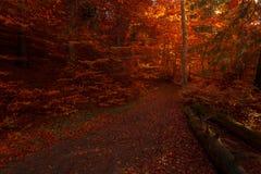 在童话浪漫秋天森林里面 图库摄影