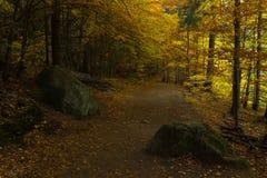 在童话浪漫秋天森林里面 免版税图库摄影
