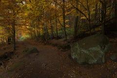 在童话浪漫秋天森林里面 免版税库存照片