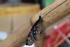 在竹子的一只蝴蝶 免版税库存图片