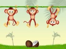 在竹子的三只猴子 向量例证