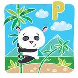 在竹子的小熊猫 字母表P 免版税图库摄影