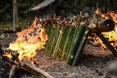 在竹子的烧伤米 免版税库存照片