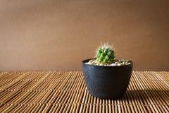 在竹屏幕上的微型仙人掌 日本式 免版税库存图片