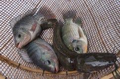 在竹柳条制品的新鲜的罗非鱼鲶鱼鱼 免版税图库摄影
