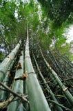 在竹树下 库存照片