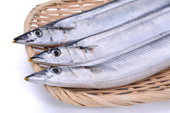在竹盘子的新鲜的未加工的沙丁鱼毛鳞鱼鱼在白色backgroun 免版税库存照片