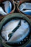 在竹篮子的新鲜的鲭鱼 库存照片