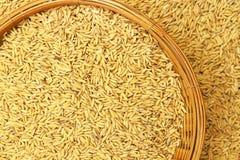 在竹篮子的水稻 库存照片