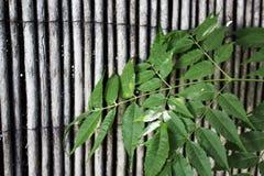 在竹纹理背景的绿色叶子 库存照片