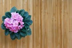 在竹背景的桃红色紫罗兰色花 免版税库存照片