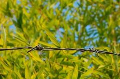 在竹背景的铁丝网 库存图片