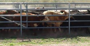 在笔的母牛 免版税图库摄影