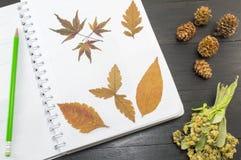在笔记本的秋叶拼贴画 库存图片