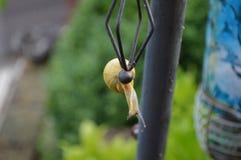 在笨拙位置-接近的蜗牛 免版税图库摄影