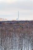 在第一雪上看法在都市公园 免版税库存图片