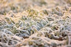 在第一雪下的冬天庄稼 库存图片