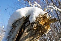 在第一雪下的冬天自然在一个晴天 库存照片