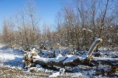 在第一雪下的冬天自然在一个晴天 图库摄影