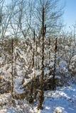 在第一雪下的冬天自然在一个晴天 免版税库存照片