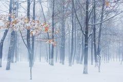 在第一雪下的秋天公园 免版税图库摄影