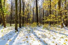 在第一雪下的秋天森林 33c 1月横向俄国温度ural冬天 免版税库存照片