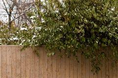 在第一雪下的绿色树在10月 免版税库存照片