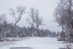在第一雪的一个美好的挪威风景在秋天 库存照片